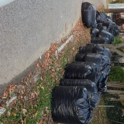 Forced by the state, Louisville revisits its ban on plastic bags for yard waste