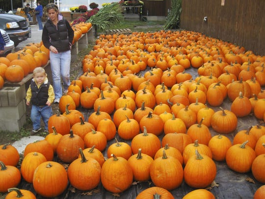 Barbara Worgan of South Burlington and son Nolan scout for the perfect pumpkin at Sam Mazza's Farm Market on Lavigne Road in Colchester several years ago. Yankee Magazine recommends Mazza's as a fall pumpkin pick-your-own destination in its fall issue.