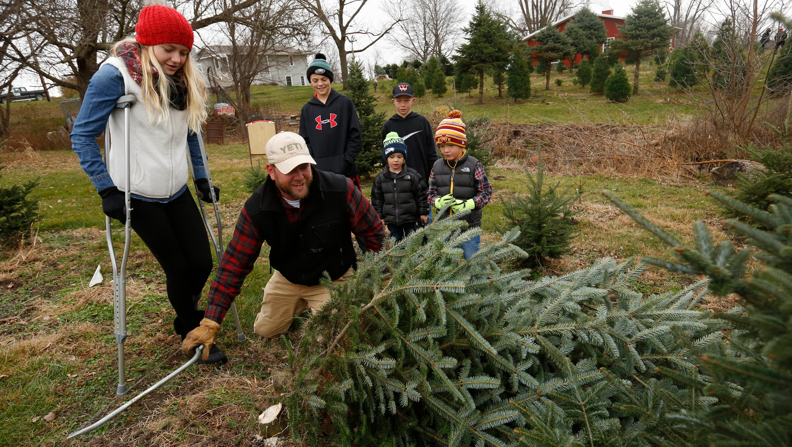 Ankeny Christmas Tree Pickup 2021 Iowa Christmas Tree Guide Grower Tips And Places To Purchase Your Tree