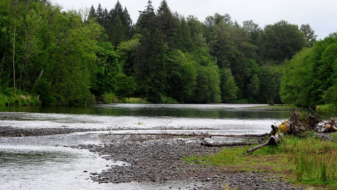 The North Santiam River before it reaches the Geren Island Water Treatment Facility in Stayton. The river is already at a near-record low stage for this time of year, according to the Army Corps of Engineers.