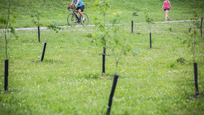 Hundreds of newly planted trees line the White River west of Tillotson Avenue Wednesday morning.