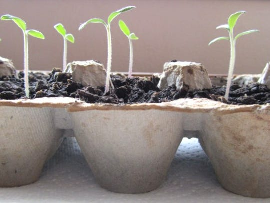 Guests can create egg carton starter gardens with help