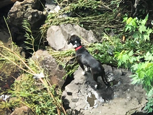 Paterson Dog Rescure 12