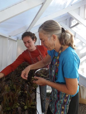 Sarah Horton, left, and Carolyn Smith work in the hydroponic greenhouse behind the Market Café.