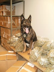 Vermont State Police K-9 Casko poses with a large quantity
