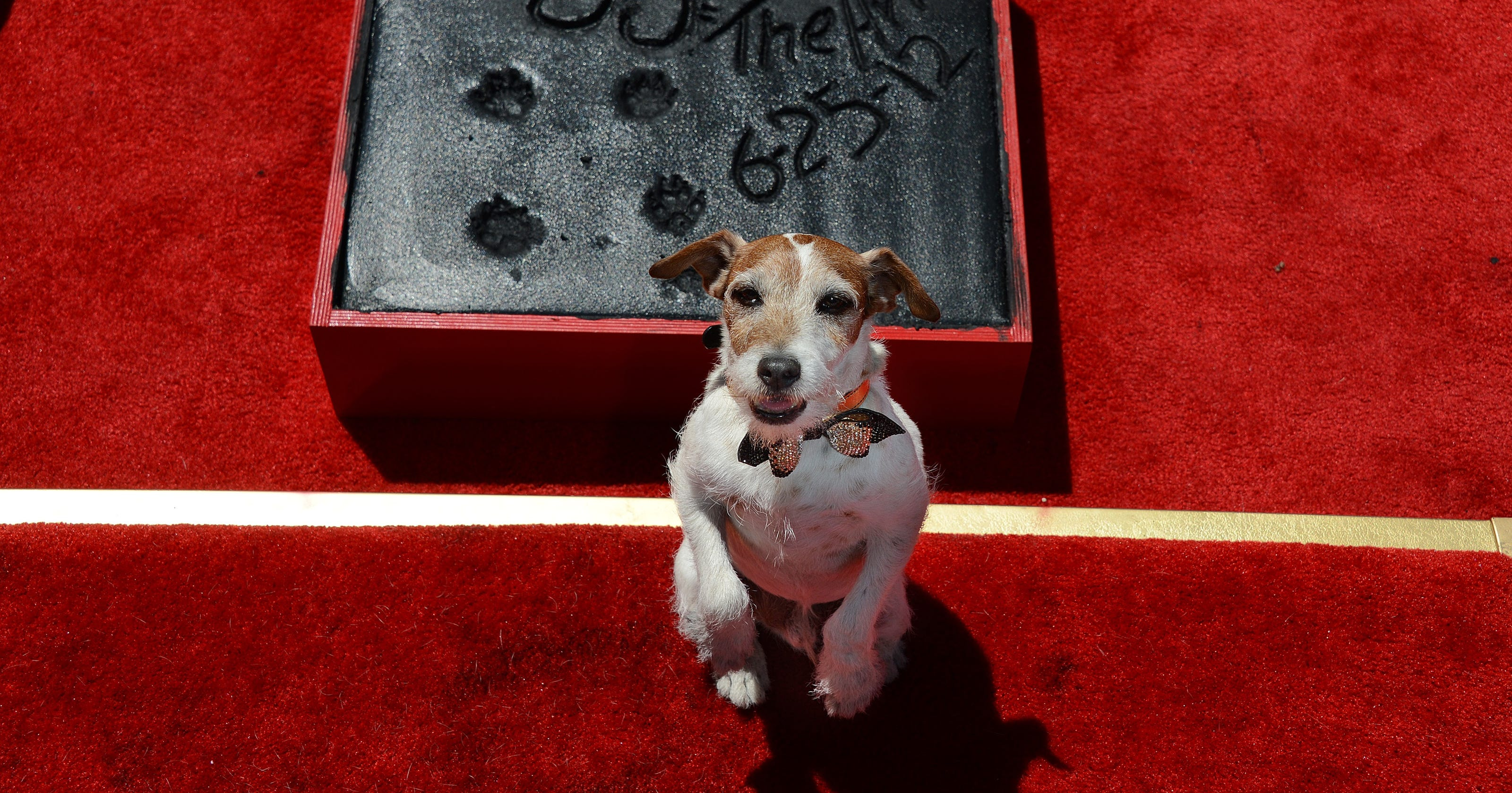 quality design d4cfb 15baa Uggie, the dog star of The Artist, dies at 13