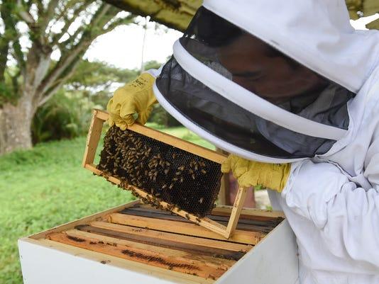 636501213843510038-bees-01.jpg