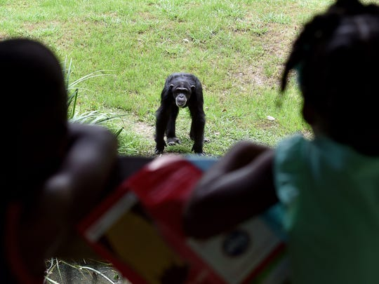 Dominique Brown Jr., 5, left, and Ta'Liyah McDaniel, 3, look at a chimpanzee at the Jackson Zoo on Tuesday.