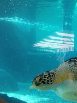 Top 5 Zoos And Aquariums In The U S
