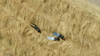 A zoomed-in view of the three people lying in the grass,