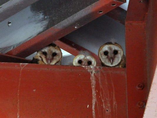 NEC Owls1.jpg