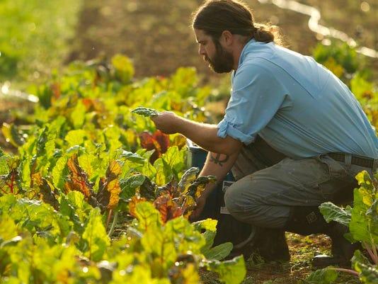 Greenbriar Farms39524.jpg