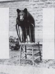 A postcard showing Burch the bear is shown in a Press-Citizen