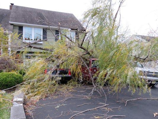 Falling Tree2