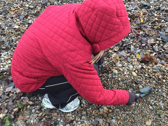 Amy Trimble hunts for beach glass.