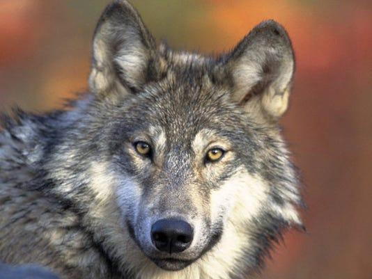 DFP 0227_wolf_pix.JPG