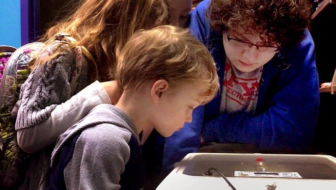 Baby chicks are hatching at the Linebaugh Public Library in Murfreesboro on Tuesday March 27, 2018. Rapt watchers are, from left, Nathan Neel, 3, Heidi Neel, 6, Abby Crowell, 11, and Max Crowell, 16.