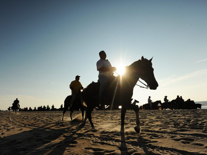 Bobby Lappin and the rest of the Saltwater Cowboys lead the northern herd of Chincoteague Ponies down the beach at Assateague, Island, Va. on Monday July 28, 2014. The annual Chincoteague Pony Swim is Wednesday, July 30.