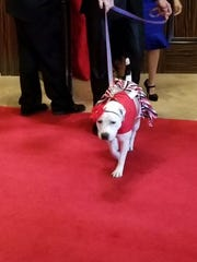 Abigail walking the red carpet at the American Humane