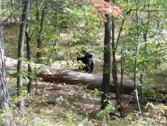 Bear Attack-Hiker Dead