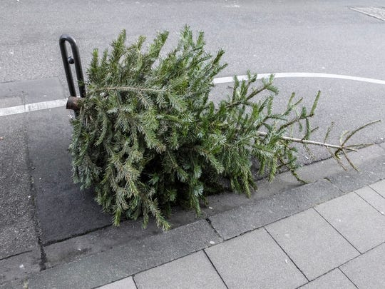 Christmas tree on the road.