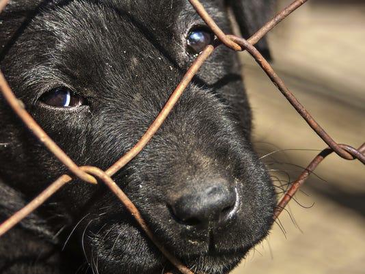 ELM 0310 animal cruelty
