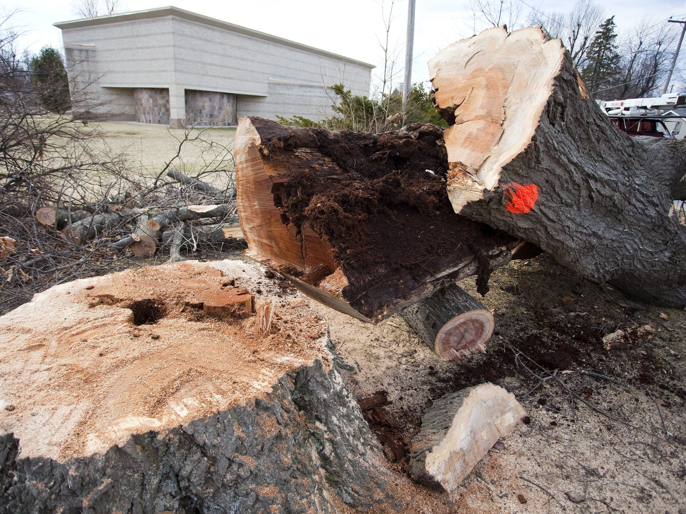 Facility upkeep issues for the art museum in recent years included tree removal. This oak tree was among several felled in 2013. It split in half due to a rot inside the trunk of the tree.