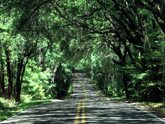 Proposed legislation would kill tree regulations statewide, including those that protect Tallahassee?s beloved canopy roads.  canopy roads.