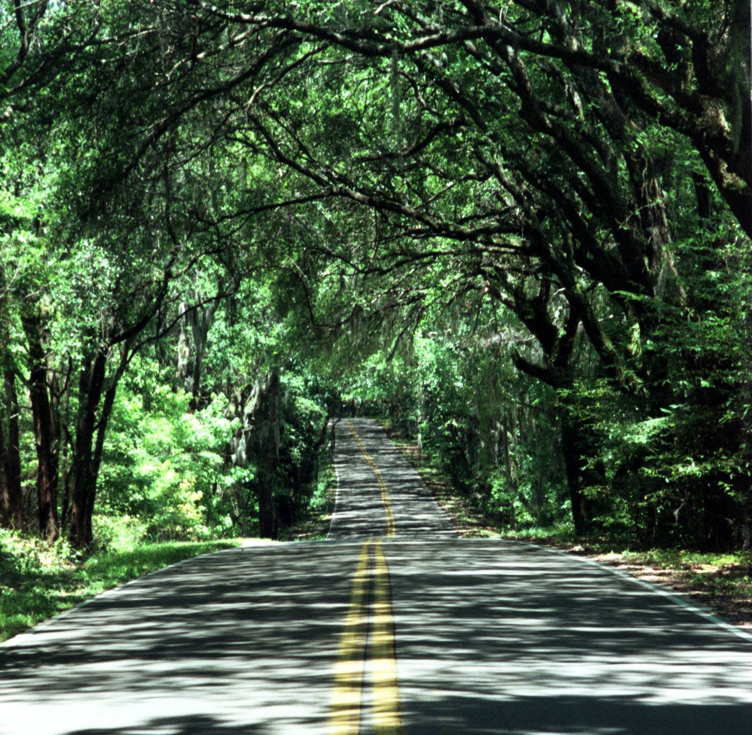 & Canopy Roads committee fears u0027sunsetu0027