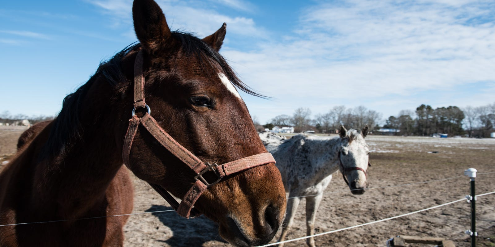 In starving horses case, why no one could help
