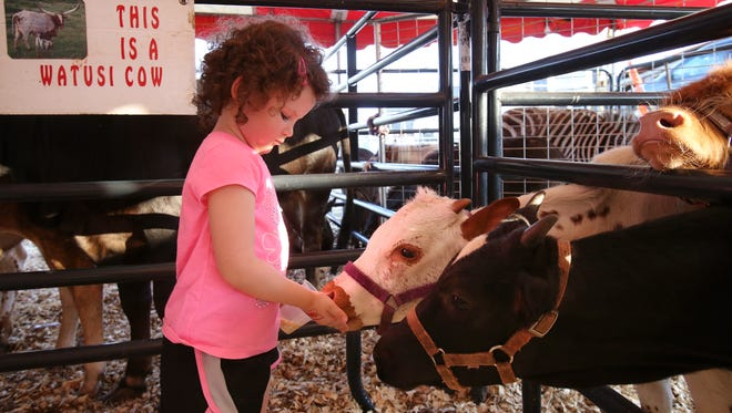 Kassidy Minks, 4, feeds calves during the Oldham County Fair in La Grange. Aug. 4, 2016