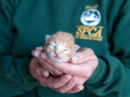 Underage kitten