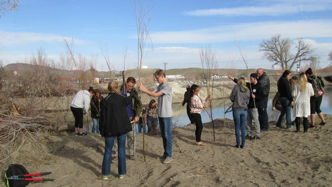 Yerington High School science students learn how to trim and plant willows before starting work on a revegetation project along the Walker River in Yerington.
