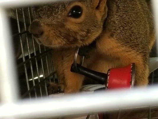 636625174370326898-squirrel.jpg