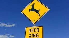 It's mating season for deer so be careful while driving.