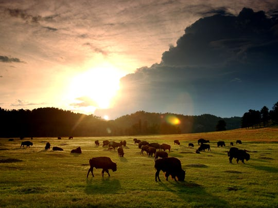 The sun sets behind a herd of bison in Wind Cave National