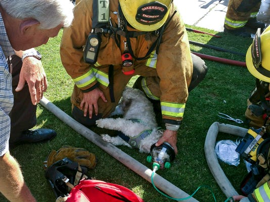 DOG RESUSCITATED