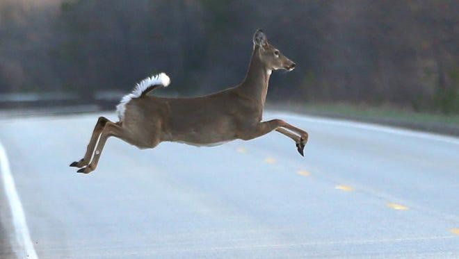 A deer runs across a road.