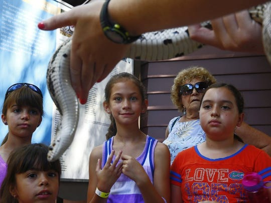 Kate Spivey, 9, from left, Sophia Spivey, 4, Beverly Sherman of Bonita Springs and Ella Johnson, 9, look at a Florida pine snake, held by naturalist Kate Davis on Saturday, June 4, 2016, at the Conservancy of Southwest Florida in Naples. Droves came out supporting the first Wildlife Hospital Baby Shower. Visitors donated supplies to help ensure the hospital's youngest patients get the best possible care. Patrons watched young mammals being fed, toured the hospital and listened to a lecture on reptiles.