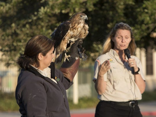 Carissa Arellanes, left, and Beverly Critcher show off a red tail hawk during a Wildlife Experience show. STAR FILE PHOTO