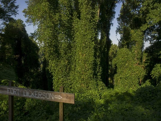 Kudzu envelopes the hillside at Fort Dickerson Park on Sept. 4, 2013.