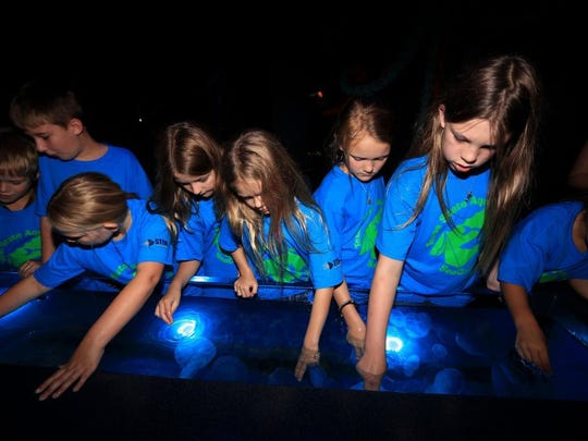 Children touch jellyfish in a touch tank during the