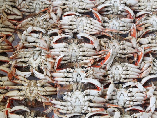 File photo - Cooked Dungeness crabs are seen in 2016 at R&R Meats in Redding. The crabs came from Oregon. (Andreas Fuhrmann/Record Searchlight)