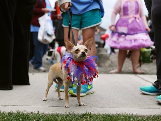 Dogs and their owners participate in the Kitsap Humane Society's 2015 PetsWalk.