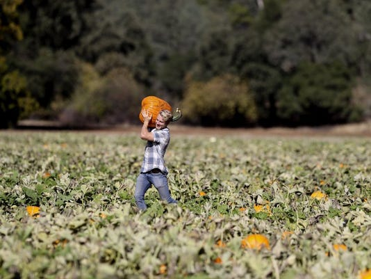 Nash Pumpkin patch.JPG