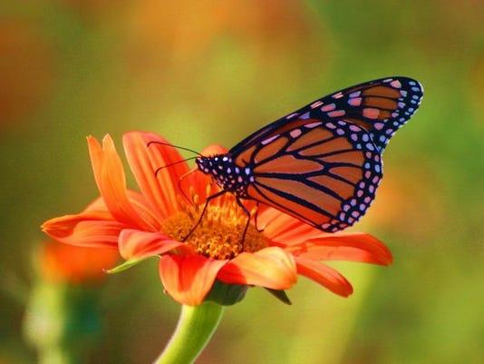-butterfly.jpg_20071022.jpg
