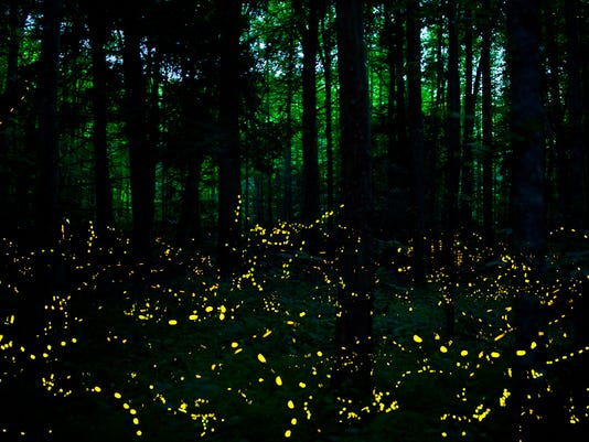 synchronous-fireflies-elkmont-smoky-mountains.jpg