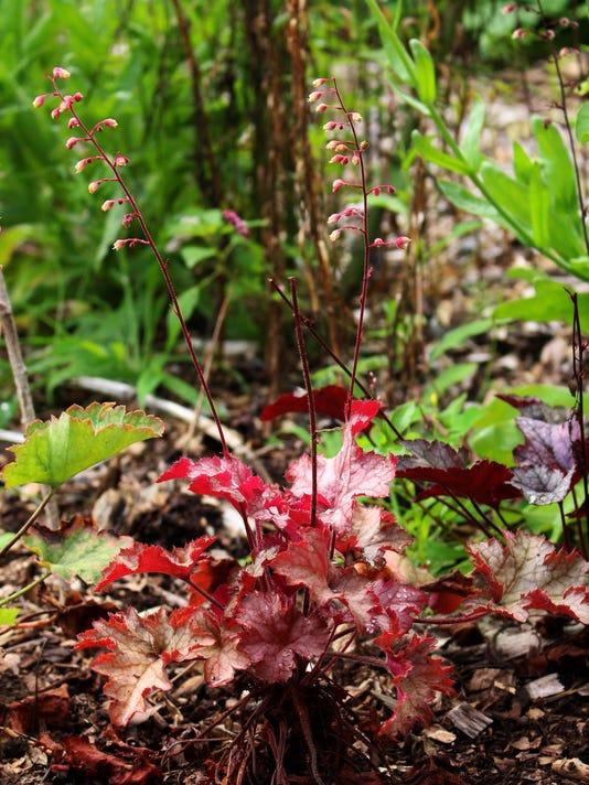 Gardening-Coral Bells_Atzl.jpg