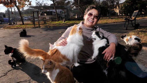 In this Dec. 17, 2015 photo, Lynea Lattanzio, founder of Cat House On The Kings, plays with some of her cats in Reedley, Calif. Lattanzio has turned her twelve acre, four-thousand square foot ranch home into what's believed to be the largest no-cage cat sanctuary and adoption center in the U.S. (Eric Paul Zamora/The Fresno Bee via AP) LOCAL PRINT OUT (VISALIA TIMES-DELTA, REEDY EXPONENT, KINGBURG RECORDER, SELMA ENTERPRISE, HANFORD SENTINEL, PORTERVILLE RECORDER, MADERA TRIBUNE, THE BUSINESS JOURNAL FRENSO); LOCAL TELEVISION OUT (KSEE24, KFSN30, KGE47, KMPH26); MANDATORY CREDIT