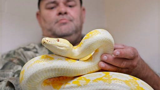 Charles Thompson, of the Humane Society of North Texas, holds an albino reticulated python in Fort Worth, Texas.The U.S. Fish and Wildlife Service has proposed strict nationwide limits on importing and shipping boa constrictors and four other snake species. The rules would prohibit bringing the snakes, including reticulated pythons, into the country and shipping them between states except for scientific and educational purposes. The agency wants to prevent them from being introduced into the wild.